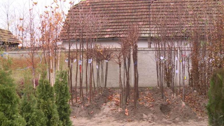 Kedvez a lombhullató facsemeték ültetésének a mostani időjárás